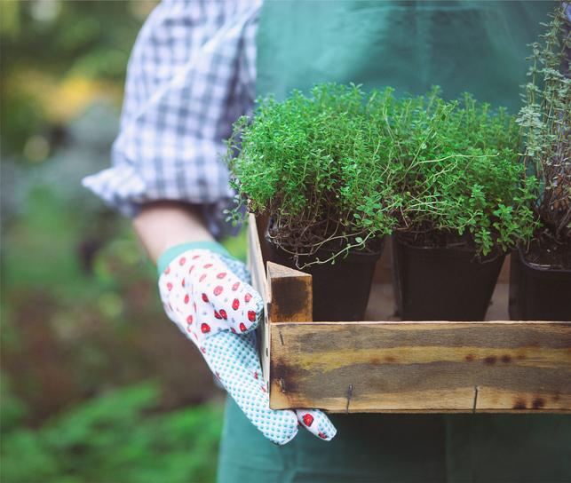Wilsonville Garden Club Annual Plant Sale