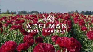 June Meeting. Peony Gardens. 10:45am @ Adelman Peony Gardens